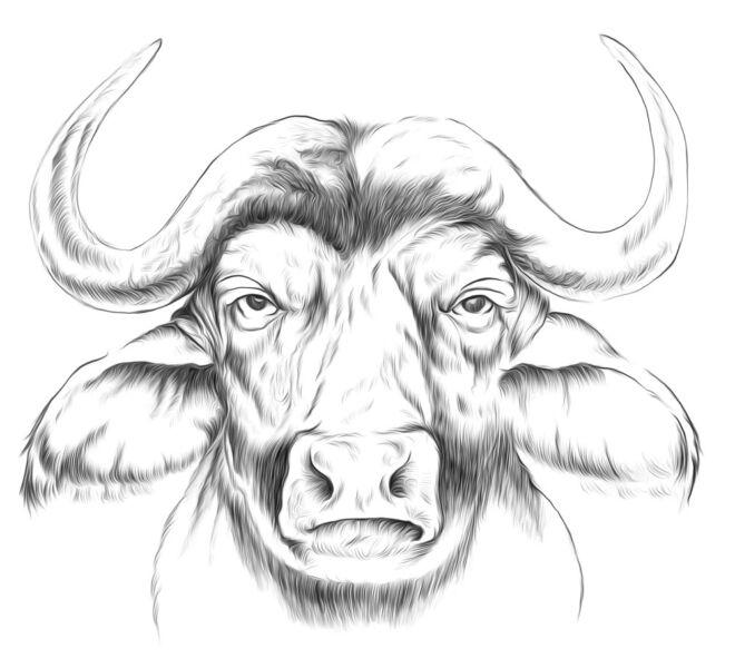 bufala disegno
